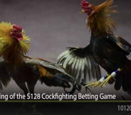 The Beginning of the S128 Cockfighting Betting Game